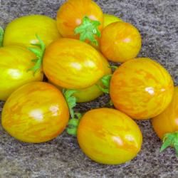 "Plant Tomate BIO ""Cerise..."