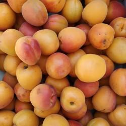 1 Kg d'abricots